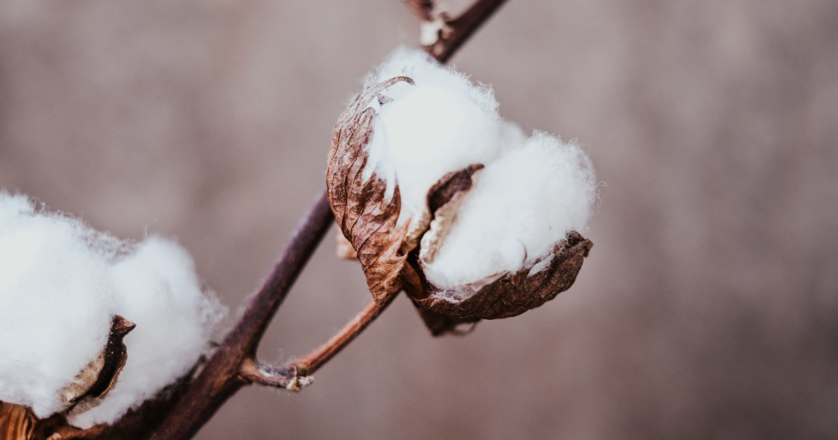 The Benefits of Organic Cotton Clothing: Why You Should Be Wearing Organic Cotton