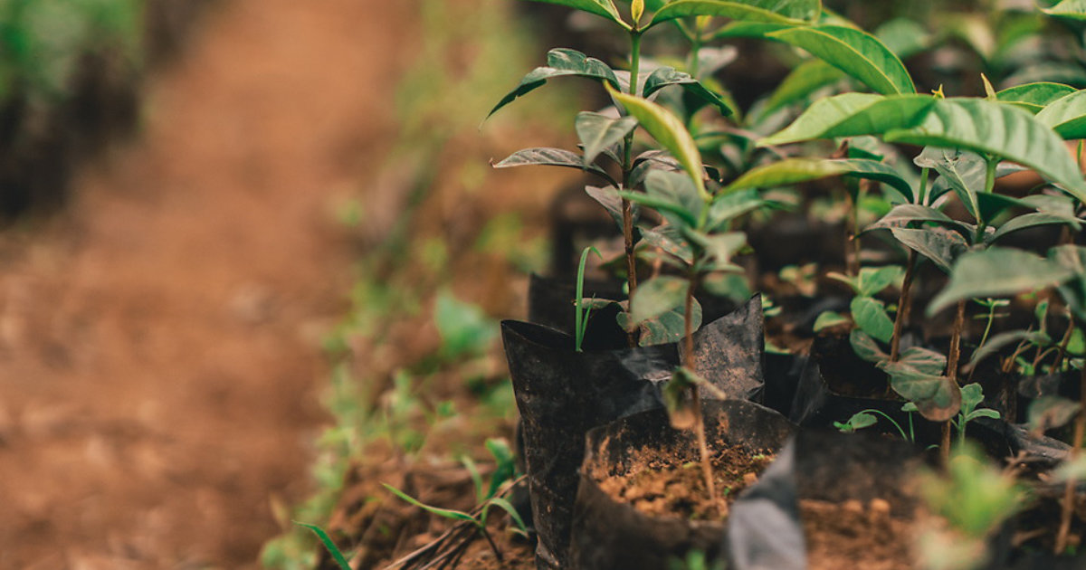 Why do we plant trees?